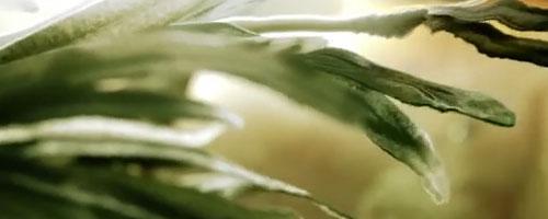 Land of Heat, une belle vidéo de motion design et effets spéciaux
